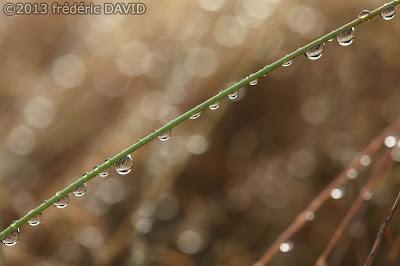 macro goutte herbe bokeh pluie rosée forêt nature automne Apremont Fontainebleau Seine et Marne