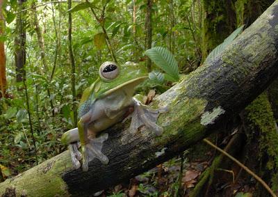 Papua New Guinea Rainforest