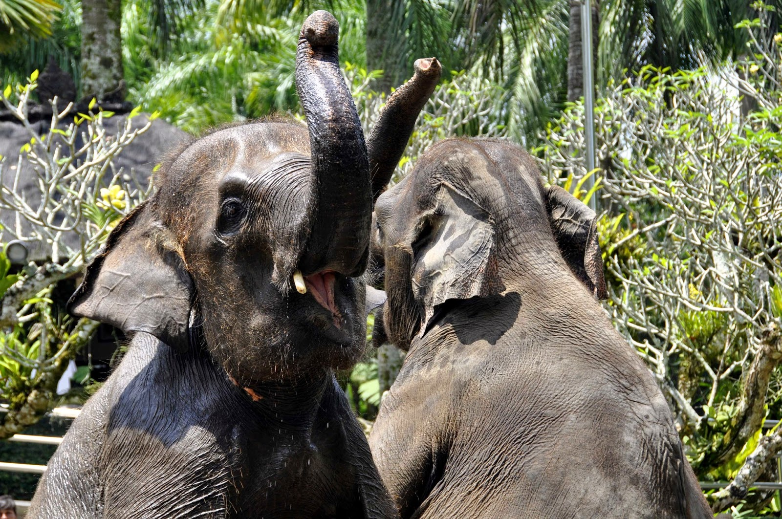 elefantes en bali
