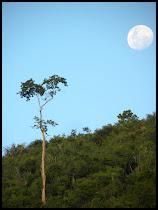 Lua despontando na serra