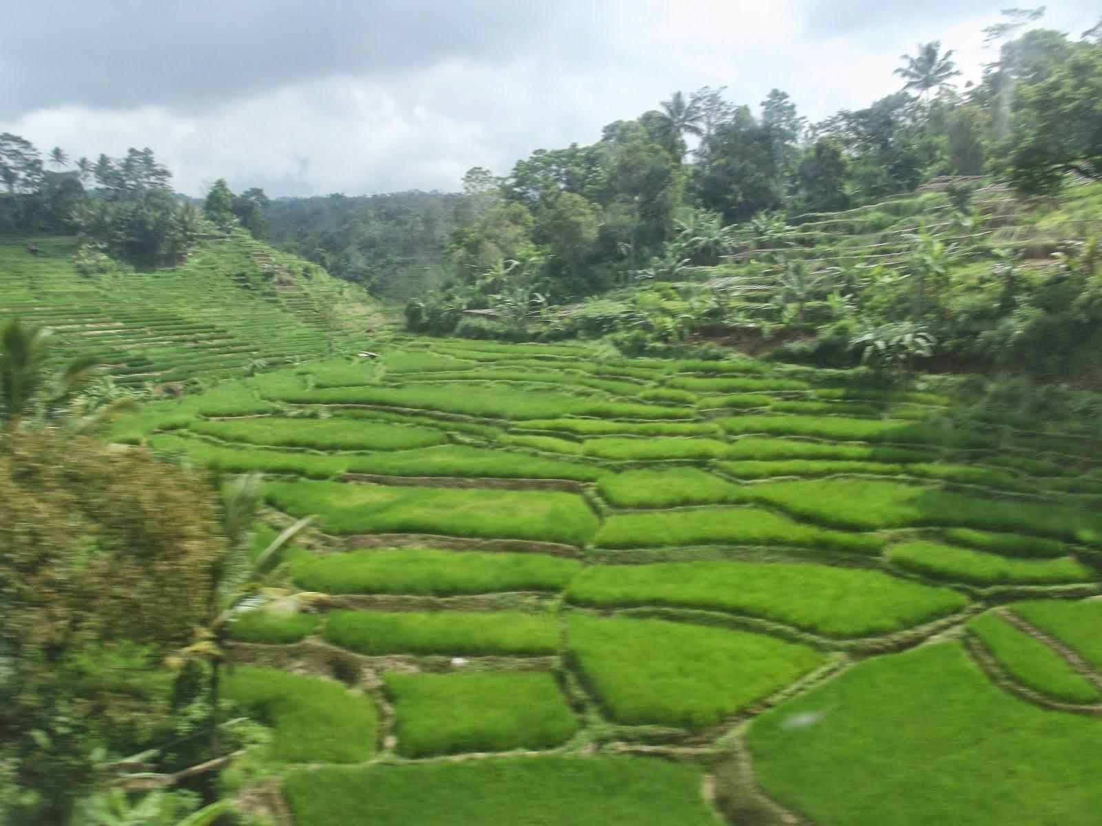 Pemandangan Alam Purwakarta, Jawa Barat, Indonesia