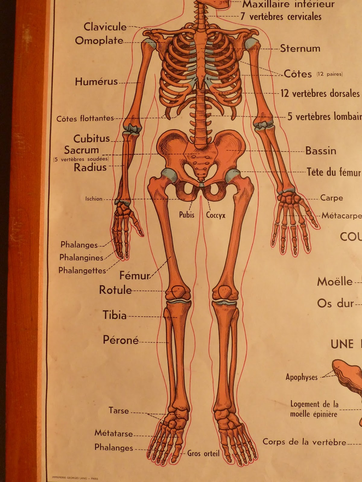 Vintage French Posters Botany Animals Anatomy, old World ...