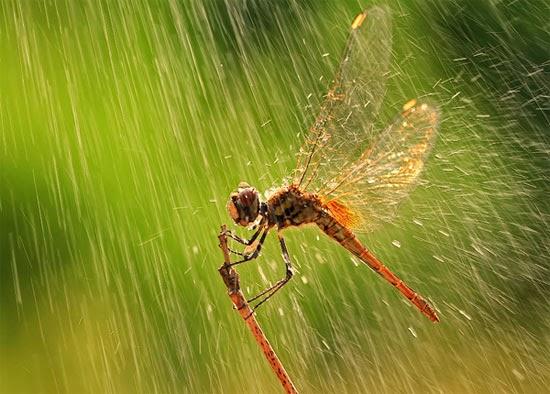 Fire fly in rain