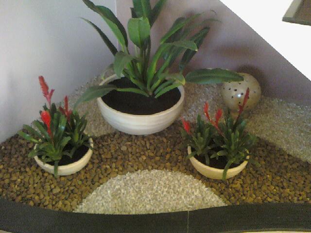 pedras para jardim em sorocaba:Jardinagem: Em baixo da escada