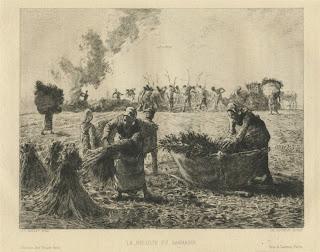 La Recolte du Sarrasin by Jean-Francois Millet