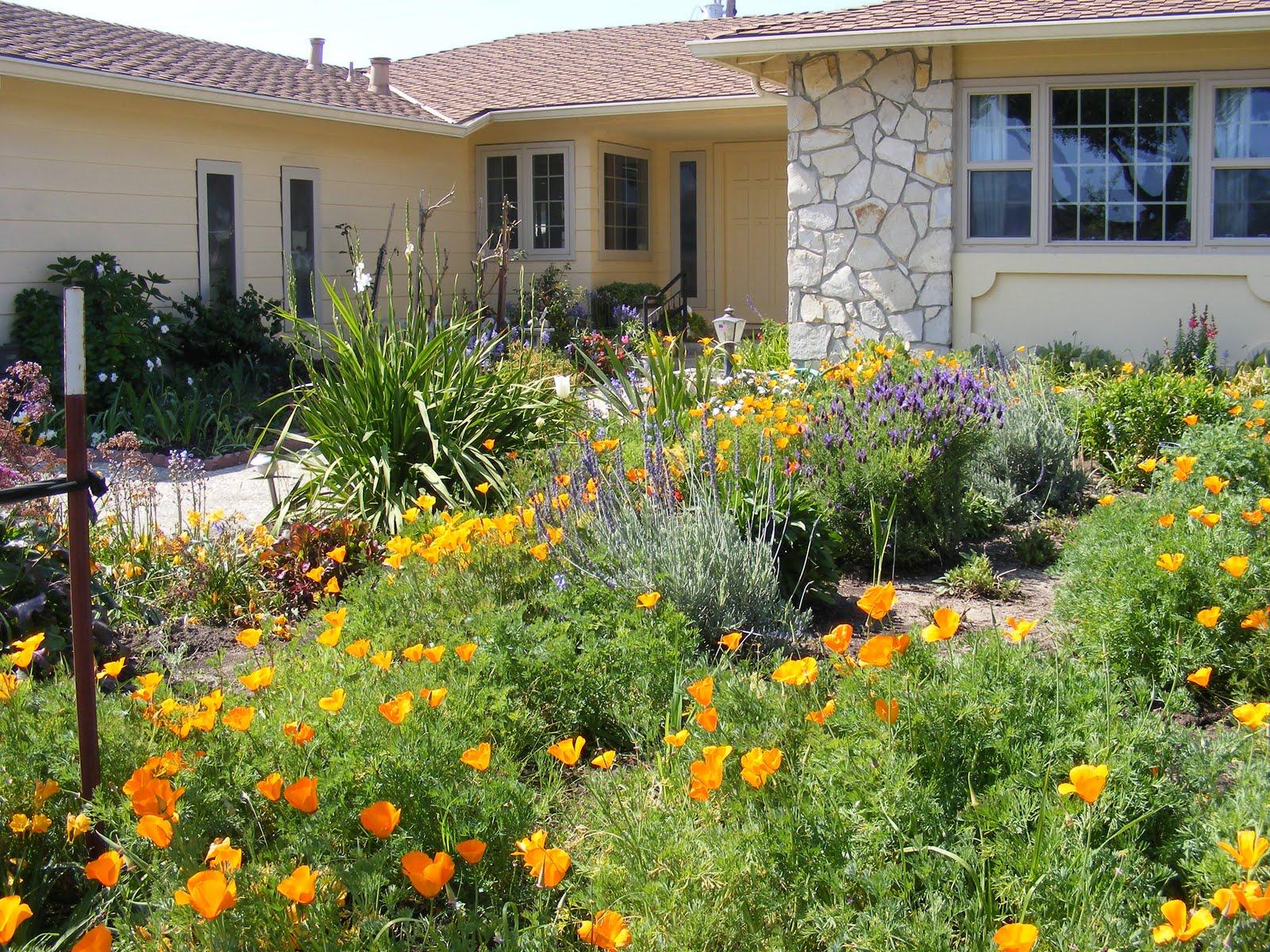 Harriett39s Gardens My Front Yard Garden