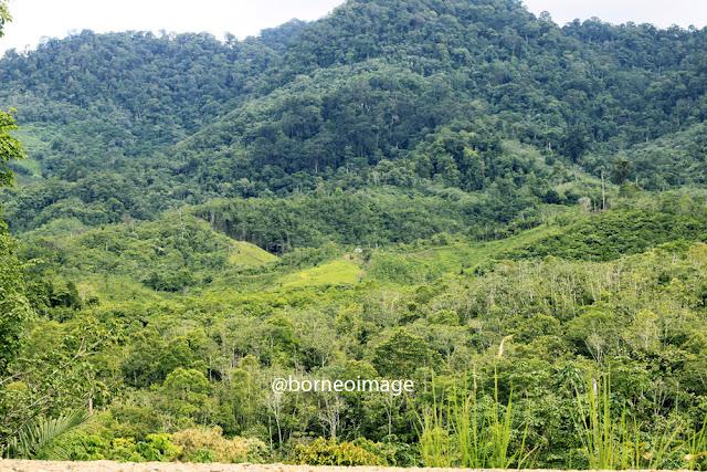 hutan desa, village forest, nanga sangan, heart of borneo, kapuas hulu