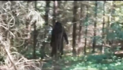 Kyle Sees Bigfoot in Canada