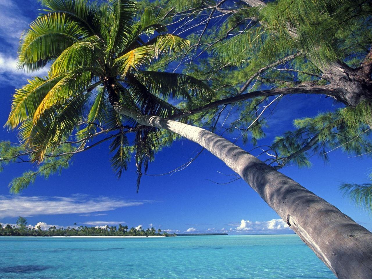 Violetas  Polinesia Francesa