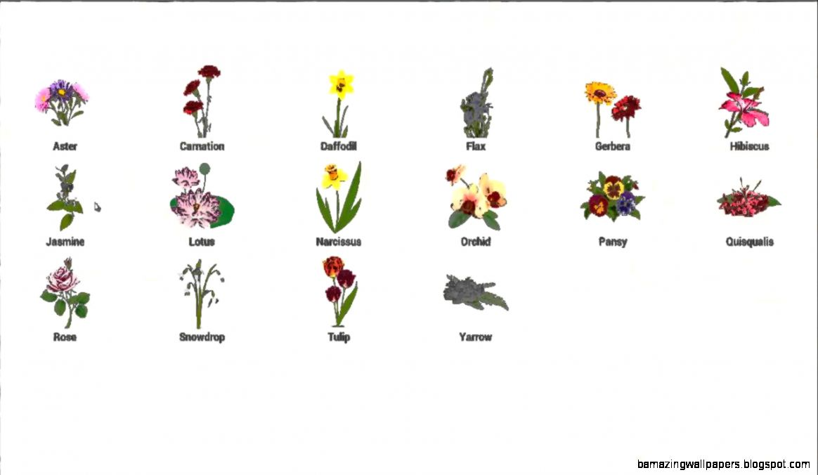 Images Of Flowers With Names Amazing Wallpapers