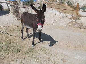 A lone donkey on Goreme Horse ranch.