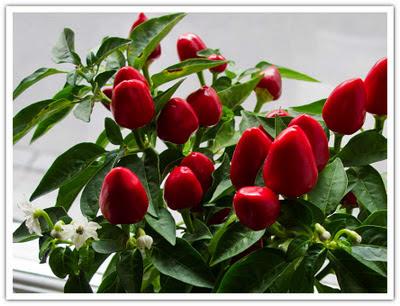 Färgglad blomma som blivit röd och fått blommor