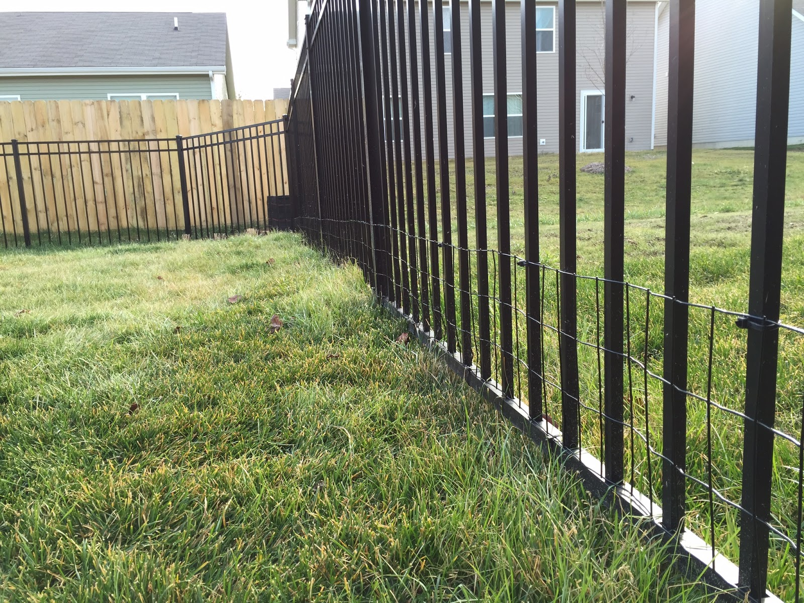 Wire Fence For Yard : Small Dog in Yard with Welded Wire Aluminum Fence Addition [Backyard