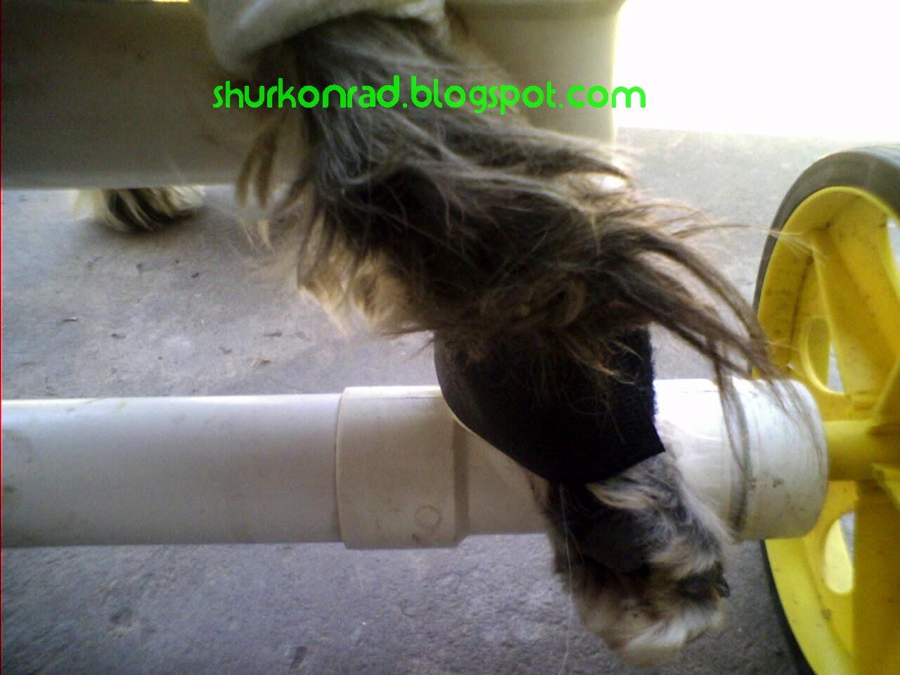 ShurKonrad perro silla ruedas dog 27