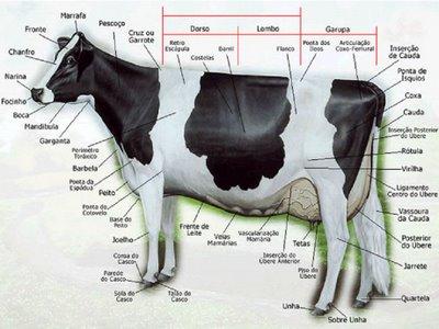 ganado exterior bovino