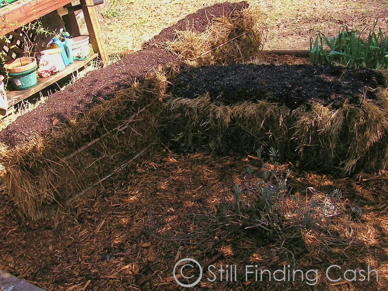 Still Finding Cash: (2) Hay Bale Gardening - Update