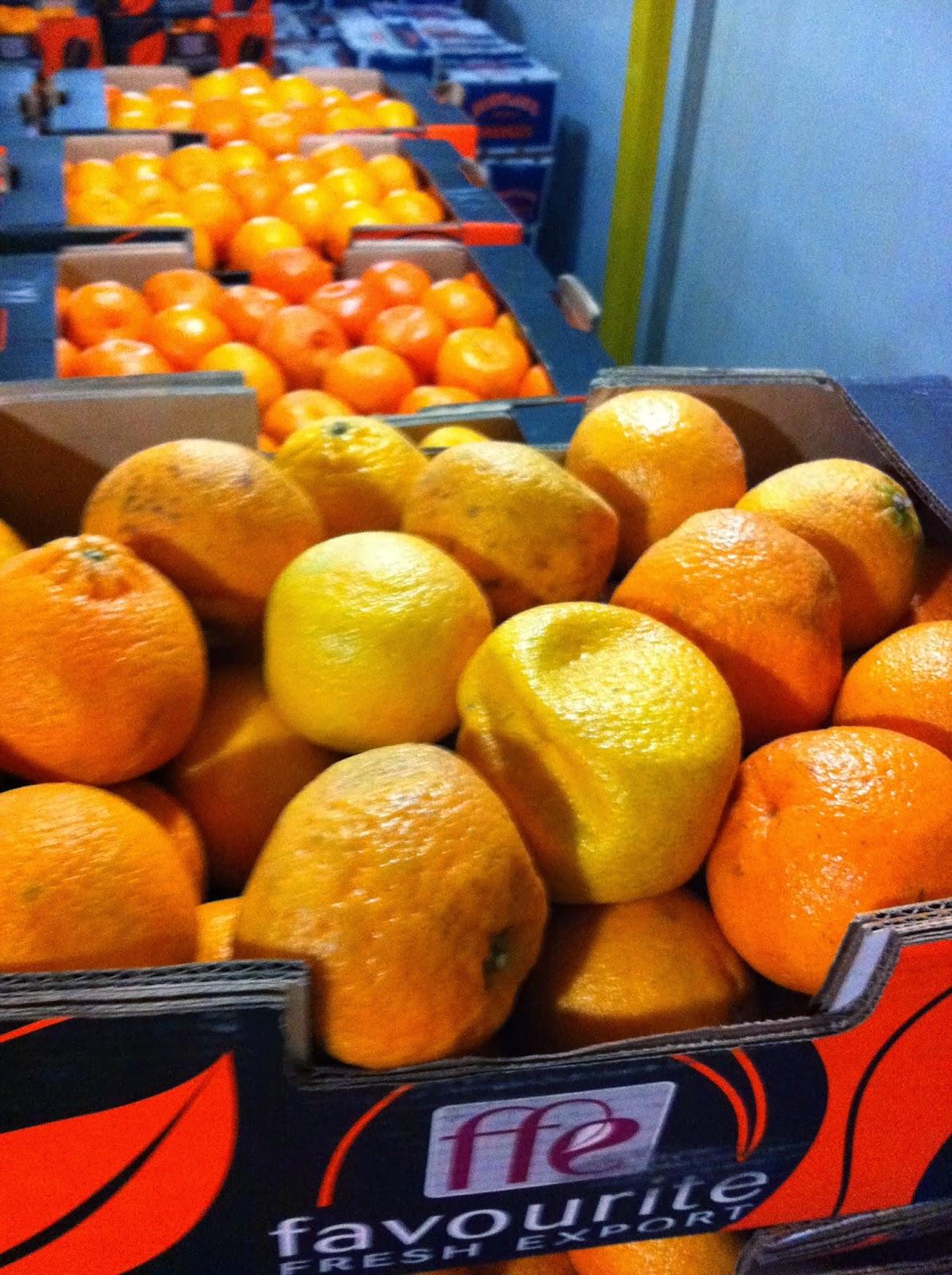 Cargo Damaged Survey Fruits Orange