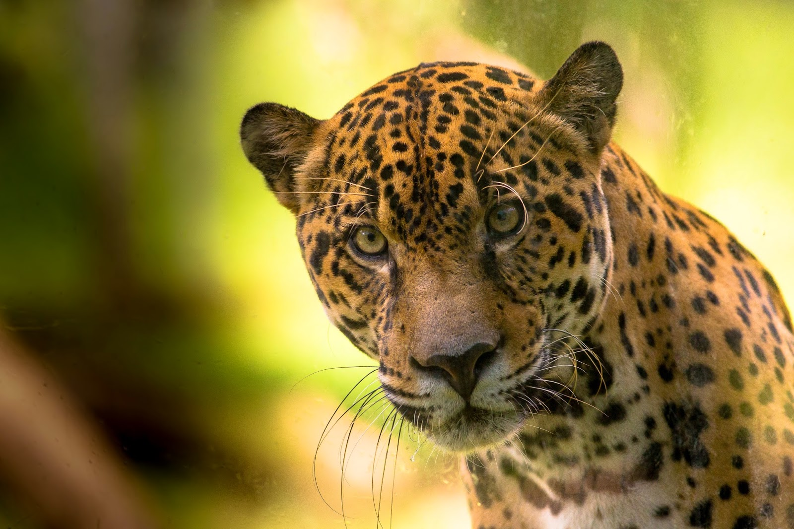 endangered environment essays Article shared by:  essay on wildlife conservation like forests, wildlife is also a national resource, which not only helps in maintaining the ecological balance but is also beneficial from economic, recreational and aesthetic points of view.