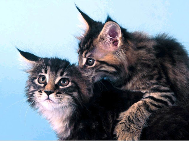 Two Cute Pussy Cats 15