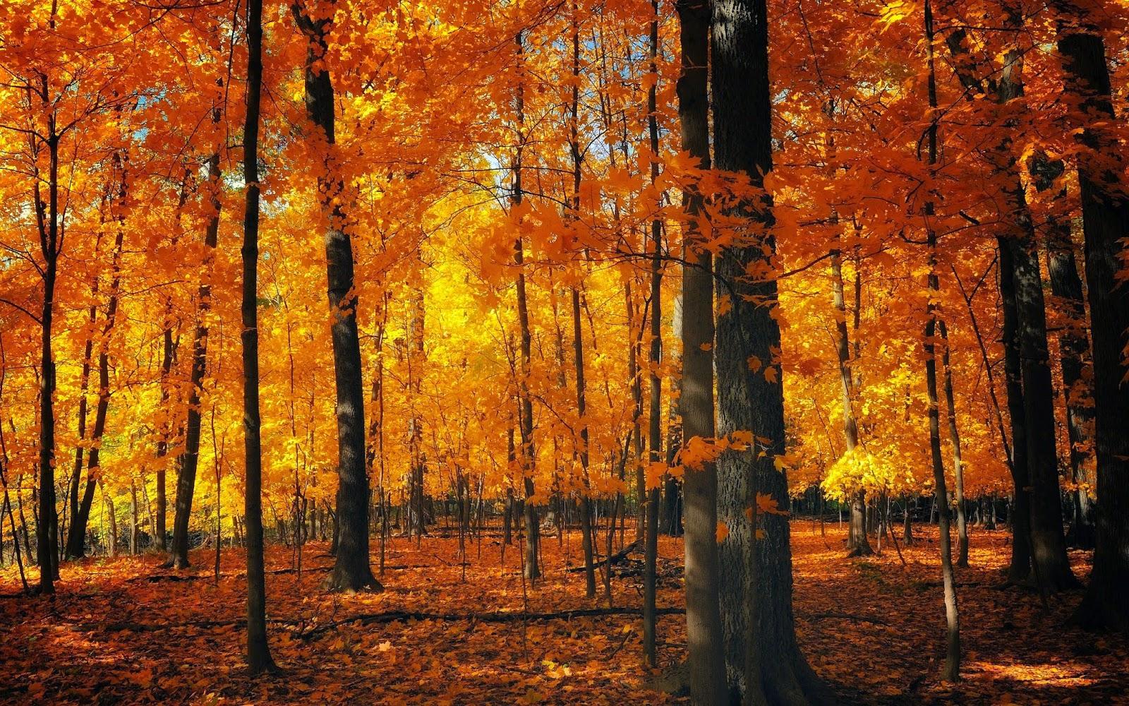 Inspiracje na jesień/Autumn inspirations