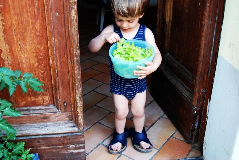 raccolta insalata da taglio in citta