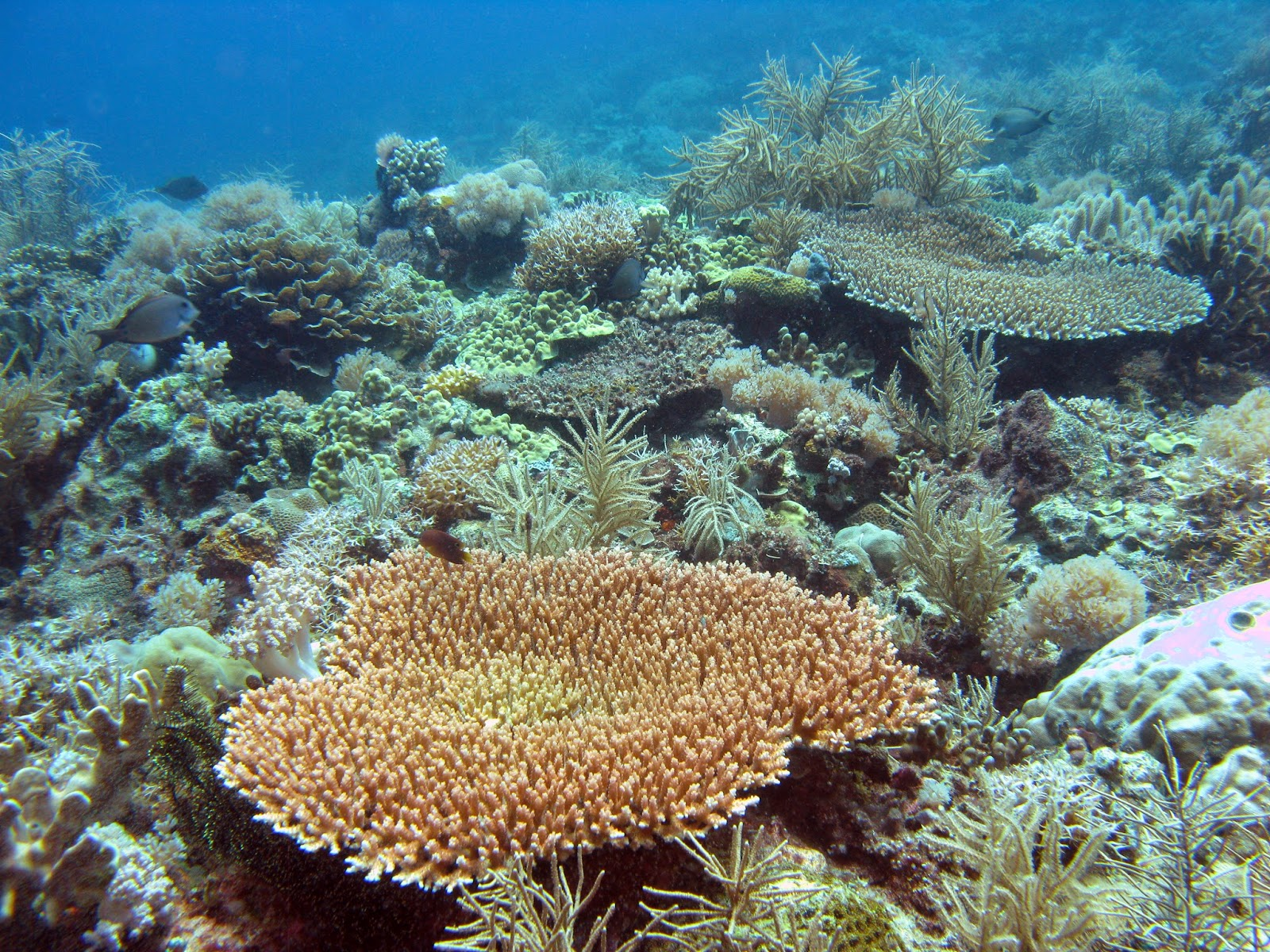 corals and coral reefs