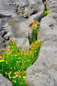 The Fertile Rock - The Burren Series