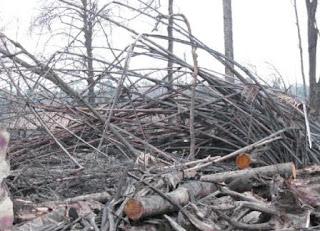 foto bahan limbah ranting  pohon