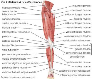 90 muscles SOUS la surface de votre peau