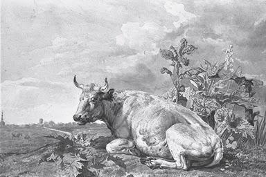 Vachement belles vache couch e dessin de jan kobell - Vache normande dessin ...