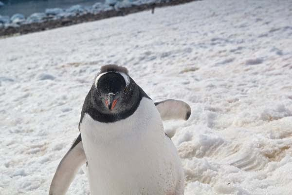 See? - He Was Taking Photos Of A Glacier In Antarctica When Suddenly, Out Of Nowhere… WHOA!