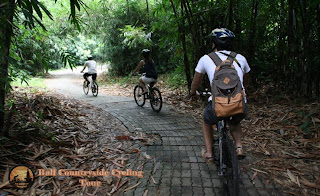 Bamboo Forest Bali Countryside Cycling Tour Tracks