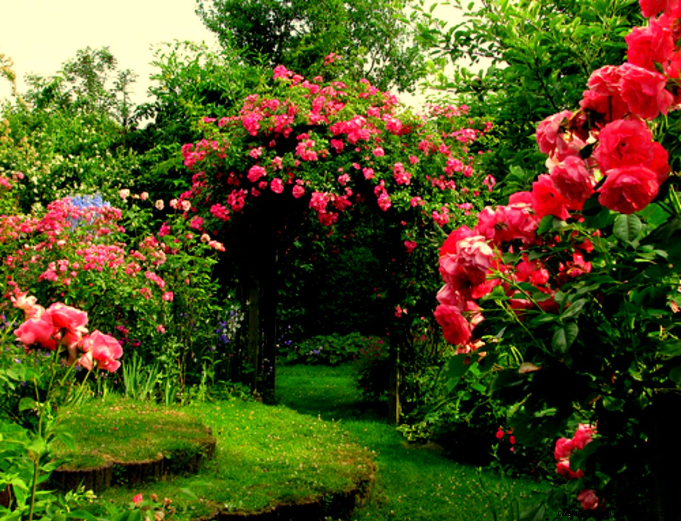 pink rose garden top hd wide wallpapers free for desktop