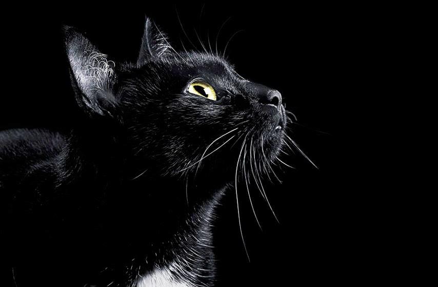 Resultado de imagen para gato negro ovillado