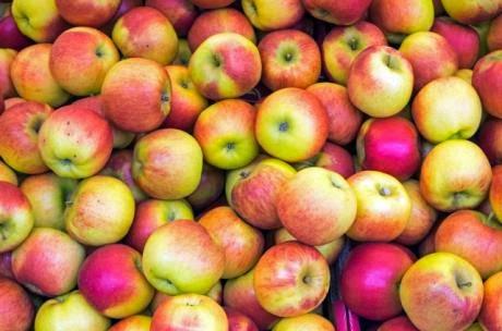 Una manzana al día mantiene alejado al doctor y a la obesidad Según un nuevo estudio.