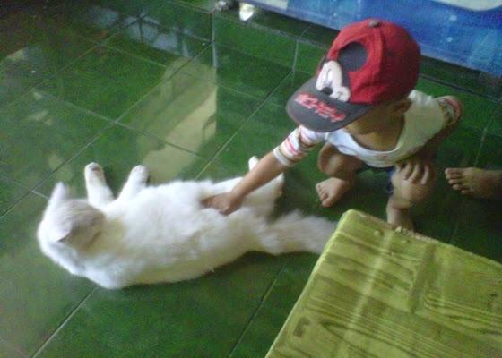 +Foto gambar anak bermain dengan kucing jinak yang lucu dan menarik