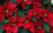 Fondos de Pantalla HD de Hermosas Flores Rojas ramo de flores rojas imagenes de flores en hd