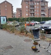 Rimosse erbacce, rifiuti e potate le rose delle aiuole di via Moccagatta