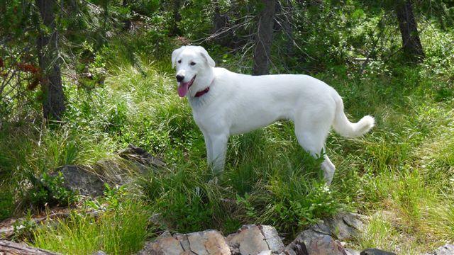 Bc Canada Dog Rescue