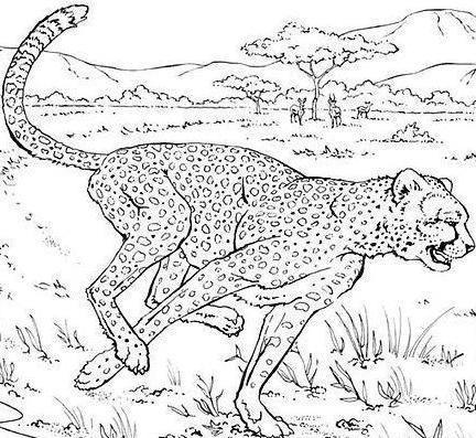 Leopardo Parado Buscando Su Presa Para Colorear Pintar Picture ...