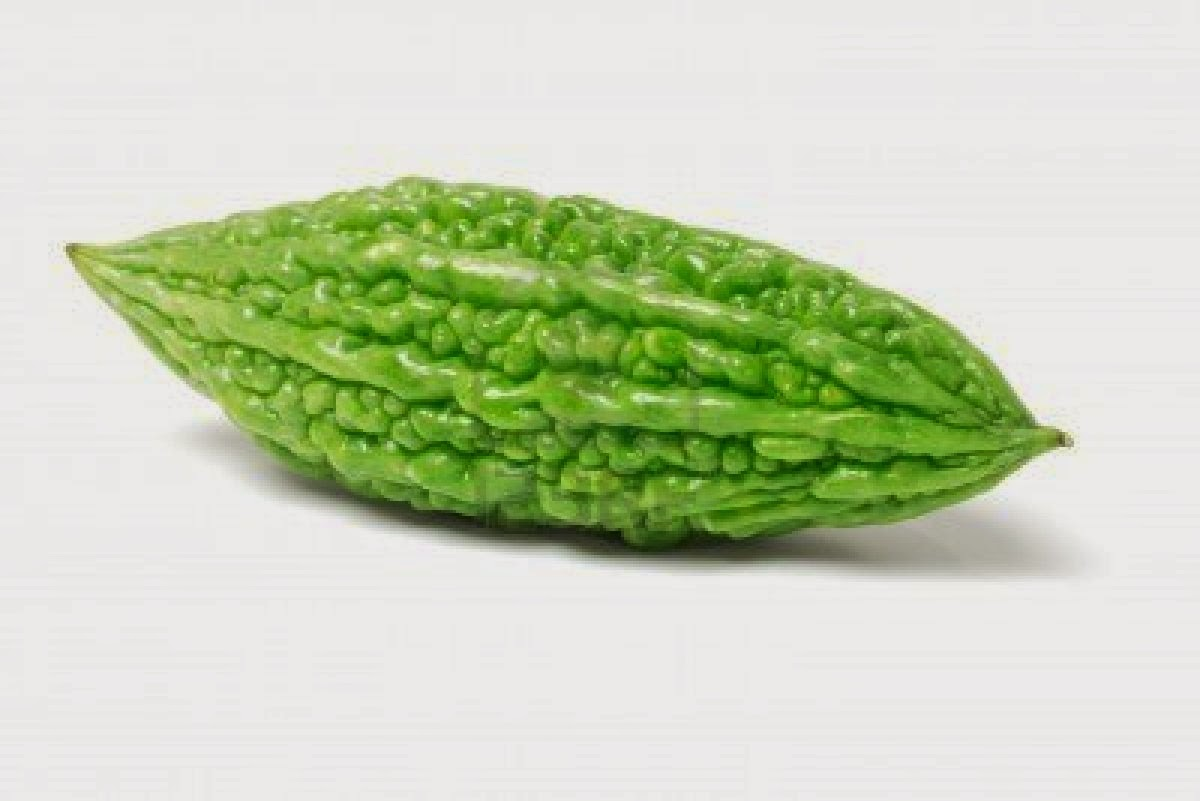 bitter gourd Bitter gourd in uae looking for bitter gourd in uae  get suppliers / manufacturers / retailers of bitter gourd in uae.