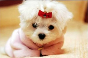 filhote de cachorrinho