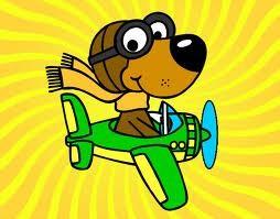 Permiso para Viajar en Avión con Perro, Gato, Viajes con Mascotas,Tramites, Gestion, INSAI