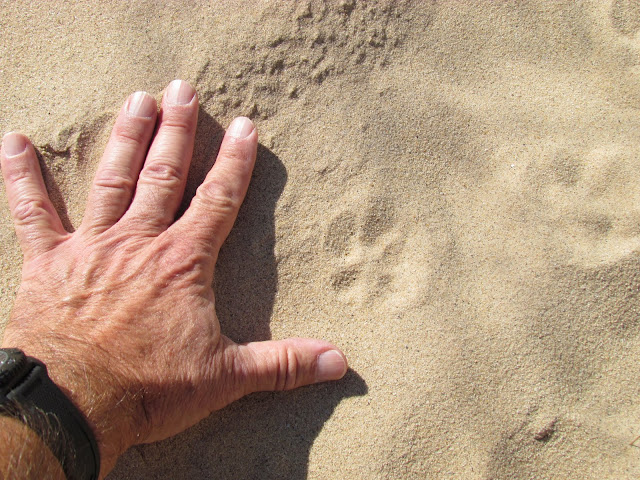 Hand on Sleeping Bear Dunes sand (photo by J. Schechter)