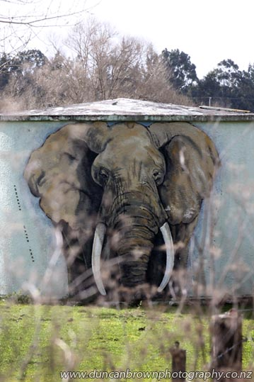 Elephant on a water tank, SH50, Tikokino photograph