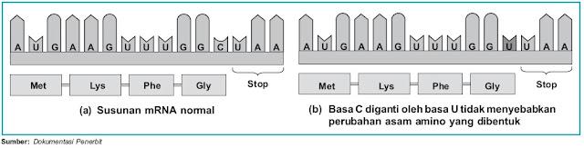 Perbedaan susunan mRNA normal dan mRNA yang mengalami silent mutation