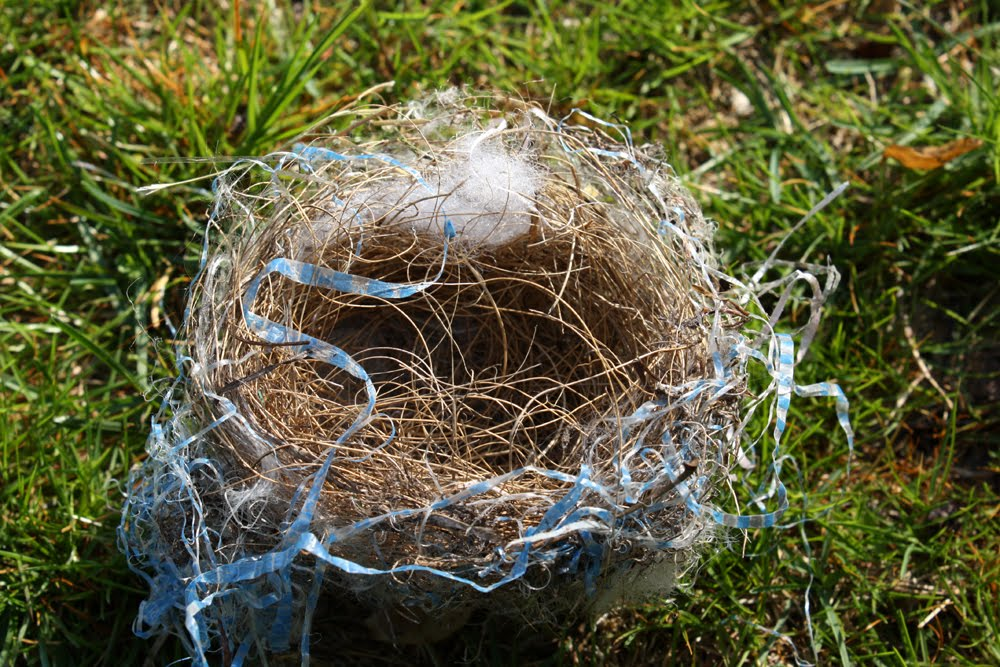Image Result For Nest With Eggs