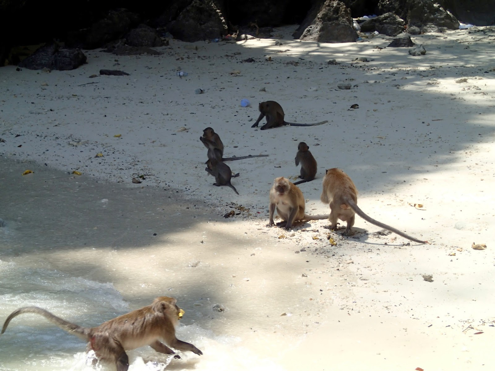Monkey Island at Phi Phi Thailand