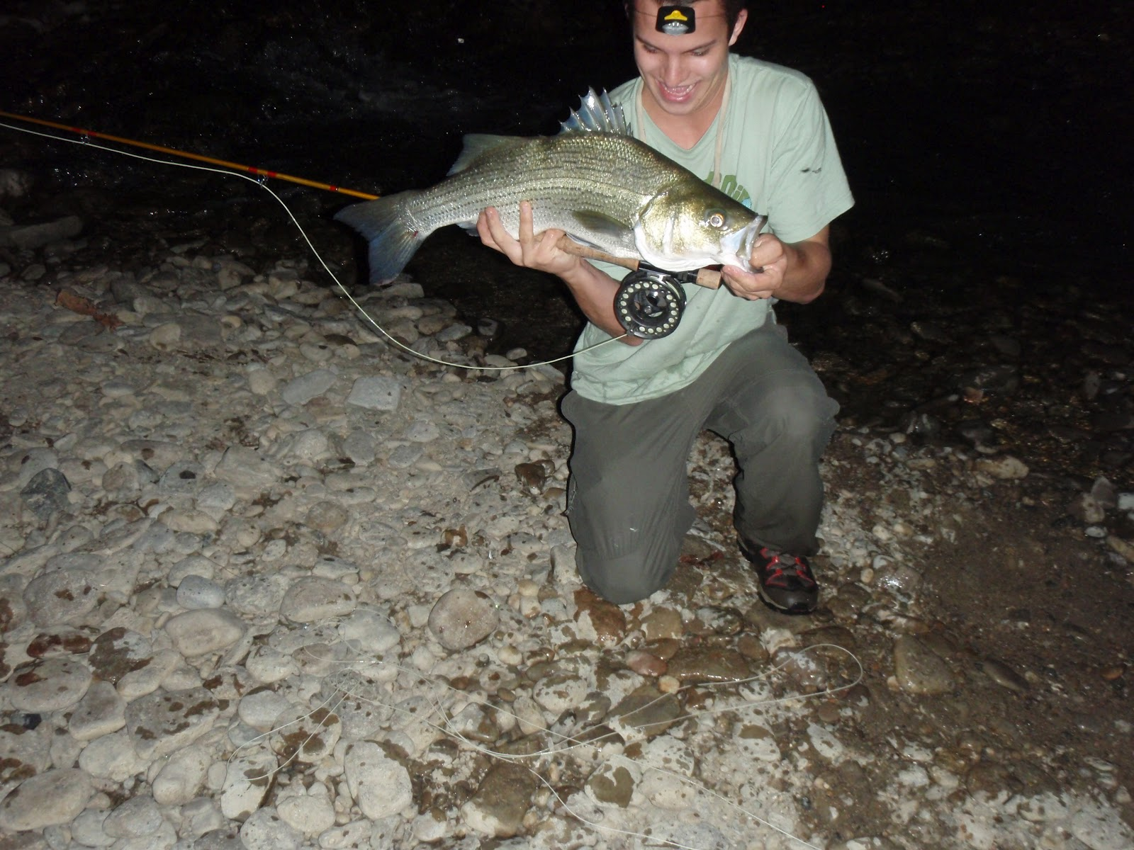 Stripers are running delamere hopkins for Striper fishing at night