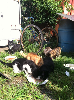 Catsparella: August 2011